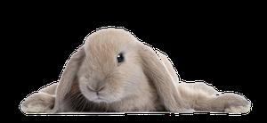 Крайне необычная щхота на кроликов