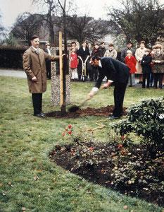 Quelle: Ev. Kirchenarchiv Baerl; Neupflanzung der Linde auf dem Gelände der Evangelischen Kirchengemeinde 1972
