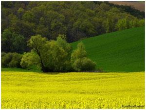 en vert et jaune