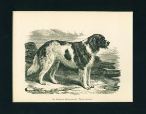Dog Print 1886 Landseer Newfoundland Dog named PRINCE CHARLIE Antique