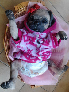 Cassandra Kit Princess Pug Denise Pratt
