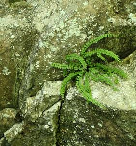 art of green 2