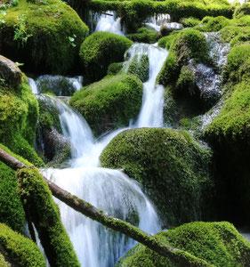 art of green 11