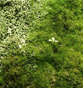 art of green 1