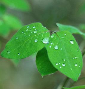 art of green 3