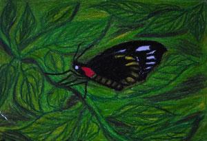 """""""Schmetterling Landkärtchen """"                 gemalt in Öl Kreide                       30 cm / 21 cm   45,-€"""