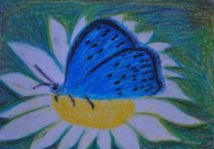 """"""" Schmetterling Gemeiner Bläuling""""          gemalt in Öl Kreide                   30 cm / 21 cm   45,-€"""