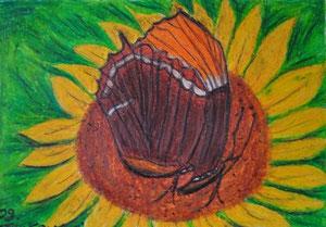 """Schmetterling ""                          gemalt in Öl Kreide                               30 cm / 21 cm   45,-€"