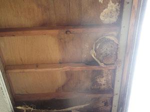 屋根裏・軒下のハチの巣駆除