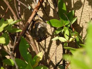 ハチの巣駆除
