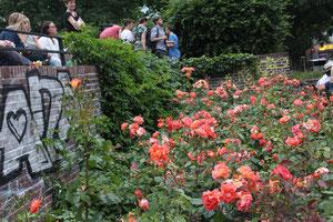 """Rosen am Arnswalder Platz, gepflanzt von der """"Gärtnergruppe"""" der Bürgerinitiative, Zuschauer beim Kiez-Fest. Foto: Helga Karl"""