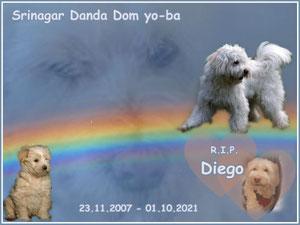 """Dom yo-ba """"Diego"""""""