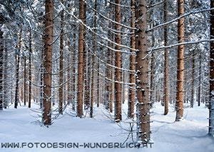 Kärnten, Wald im Winter (Fotodesign-Wunderlich)