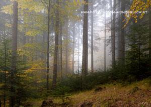 Wald im Herbst (Fotodesign-Wunderlich)
