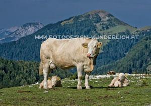 Kärnten, Oisternig, Feistritzer Alm (Fotodesign-Wunderlich)