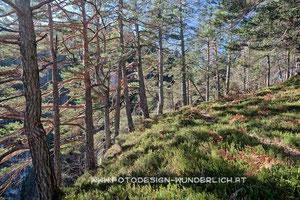 Kärnten, Wald im Herbst (Fotodesign-Wunderlich)