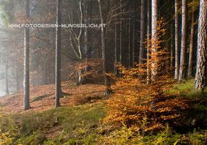 Kärnten, Herbst, Wald im Nebel (Fotodesign-Wunderlich)