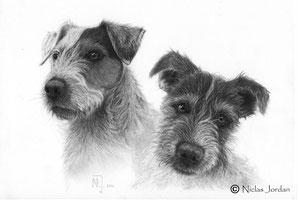 """Parson Russel Terrier """"Bruno und Danger"""" 2021"""