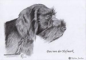 """DD-Welpe """"Pan von der Hofmark"""" 2013"""