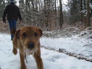 ....hilfe bekam er von unserem extra für diese Wanderung ausgebildeten Fährtenhund....