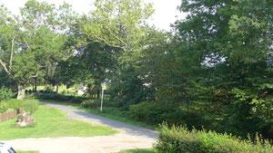 Blick Richtung Bodden im Sommer