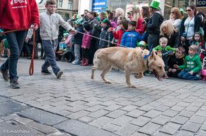 Galway, parade de la St-Patrick, SPA irlandaise