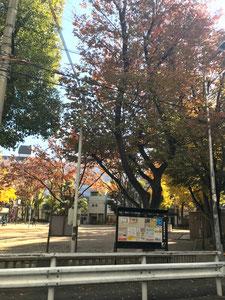 ②  南側の福島公園を横目に直進