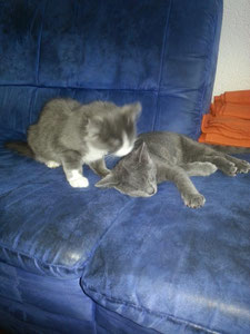 Marley et Kida