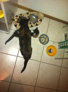 Croix de chats