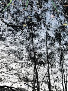 Reflet d'arbre 1