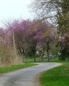 Prunus2-P1070931
