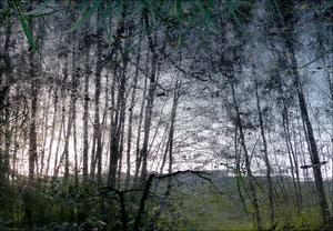 Reflet d'arbre 3
