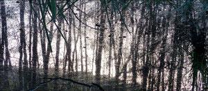 Reflet d'arbre 5