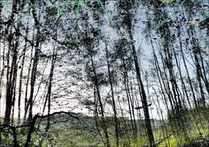 Reflet d'arbre 2