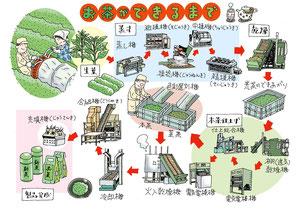 生産 流通 お茶 収穫 製造販売