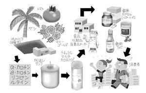 生産 流通 サプリメント製造販売