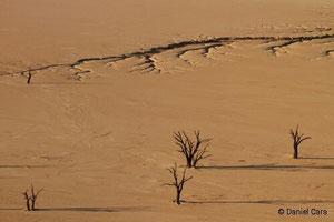Namibia salar