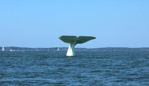 Cette queue de baleine que nous n'avons pas vue en Islande !