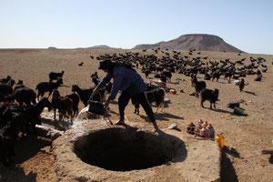 Ziegenherde beim Brunnen