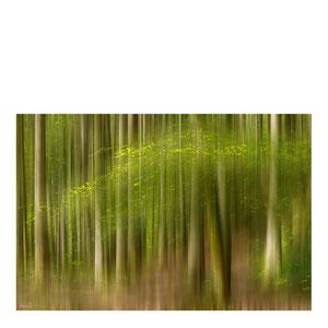 Sehnsucht nach dem Grün des Sommerwaldes