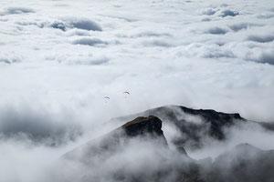 Vogelfreifliegen Nebelhorn