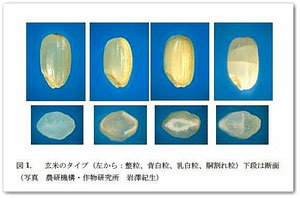 ■玄米のタイプ(整粒、背白粒、乳白粒、胴割れ粒)