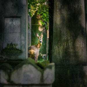 Zwischen den Gräbern