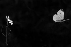 Von Blüte zu Blüte