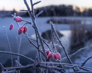 Winterfrucht