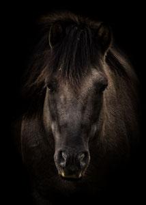 Porträt eines Wildpferdes