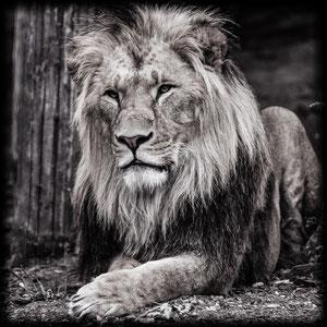 Der alre König