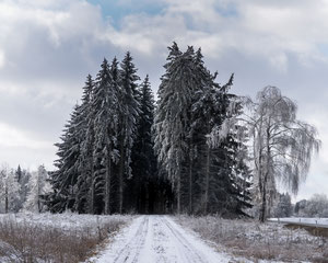 Wald-Allee