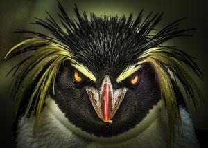 Angry?