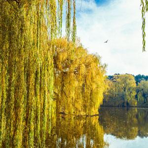 Am Teich